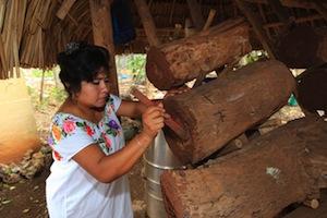 Maya bee log